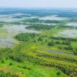 Wetland, top view — Stock Photo