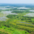 Wetland, top view - Stock Photo