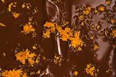 Hausgemachte schokolade mit orange — Stockfoto