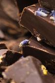 ラベンダーの花を持つ自家製チョコレート — ストック写真