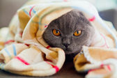 Под одеялом — Стоковое фото