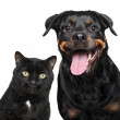 Portrait of cat and dog on white — Stock Photo