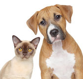 Katzen- und porträt auf weißem hintergrund — Stockfoto