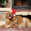 Golden retriever in Santa xmas cap — Stock Photo