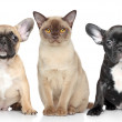 Cat and dog puppies on a white background — Stock Photo