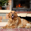 Golden retriever dog lying near a fireplace — Stock Photo