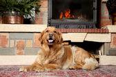 Golden retriever dog lying near a fireplace — Stock Photo