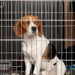 Stock Photo: Dog in cage