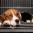 Dog in cage - Stock Photo