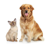 Cat and dog together — Stockfoto