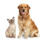 Katze und hund zusammen — Stockfoto