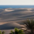 Maspalomas Dunes — Stock Photo #8867575