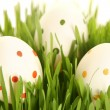 White eggs on greeen — Stock Photo