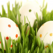 White eggs on greeen — Stock Photo #8820212