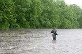 Fisherman catches of salmon river — Stock Photo