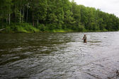 Fisherman catches of salmon in the river — Stock Photo