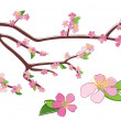 Branch of peach with rosy flowers - vector — Stockvectorbeeld
