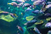 Schools of fish — Stock Photo