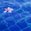 Plumeria in pool — Stockfoto