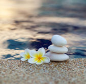 Plumeria flower and stones — Stock Photo