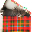 Kitten in the box — Stock Photo