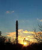 Rookvrije pipe plant — Stockfoto