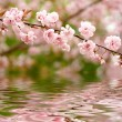 Stock Photo: Spring flowers reflected in water