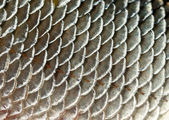 Fish scales background — Stock Photo