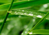 Green grass with raindrops — Stock Photo
