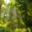 Morning summer forest — Stock Photo