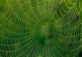 Spider web with water drops — Stock Photo