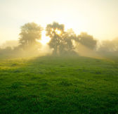 Foggy medow at susrise — Stock Photo