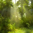 Beautiful morning in the forest — Stock Photo #9820904