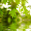 Green leaves reflecting in the water — Stock Photo #9820975