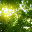 Sun in deep forest background — Stock Photo