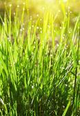 Grama verde com gotas de água — Foto Stock