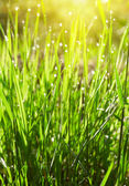 Green grass with waterdrops — Stock Photo