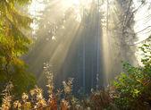 Ochtend bos — Stockfoto
