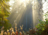 Morning forest — Stock Photo
