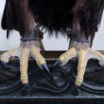 Eagle claw — Stock Photo #10284158