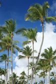 Exotic coconut palm trees on the beach — Stock Photo