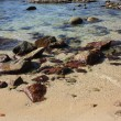 Stones on the tropical beach — Stock Photo #8739954