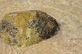 La piedra en la playa tropical — Foto de Stock