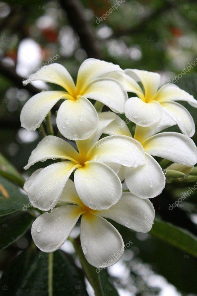 fleurs blanches exotiques et feuilles vertes photo 8788575. Black Bedroom Furniture Sets. Home Design Ideas