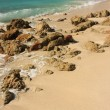 Stones on the tropical beach — Stock Photo