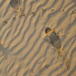Stock Photo: Footprints in sands