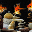 Funny Goldfish in aquarium — Stock Photo