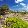 Mauritius. Stony landscape of the island Gabriel — Stock Photo