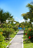 Footpath to the sea among tropical vegetation. Mauritius — Stock Photo