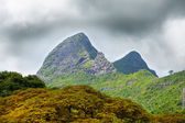 Nature of Mauritius. Wood and mountains — Stock Photo